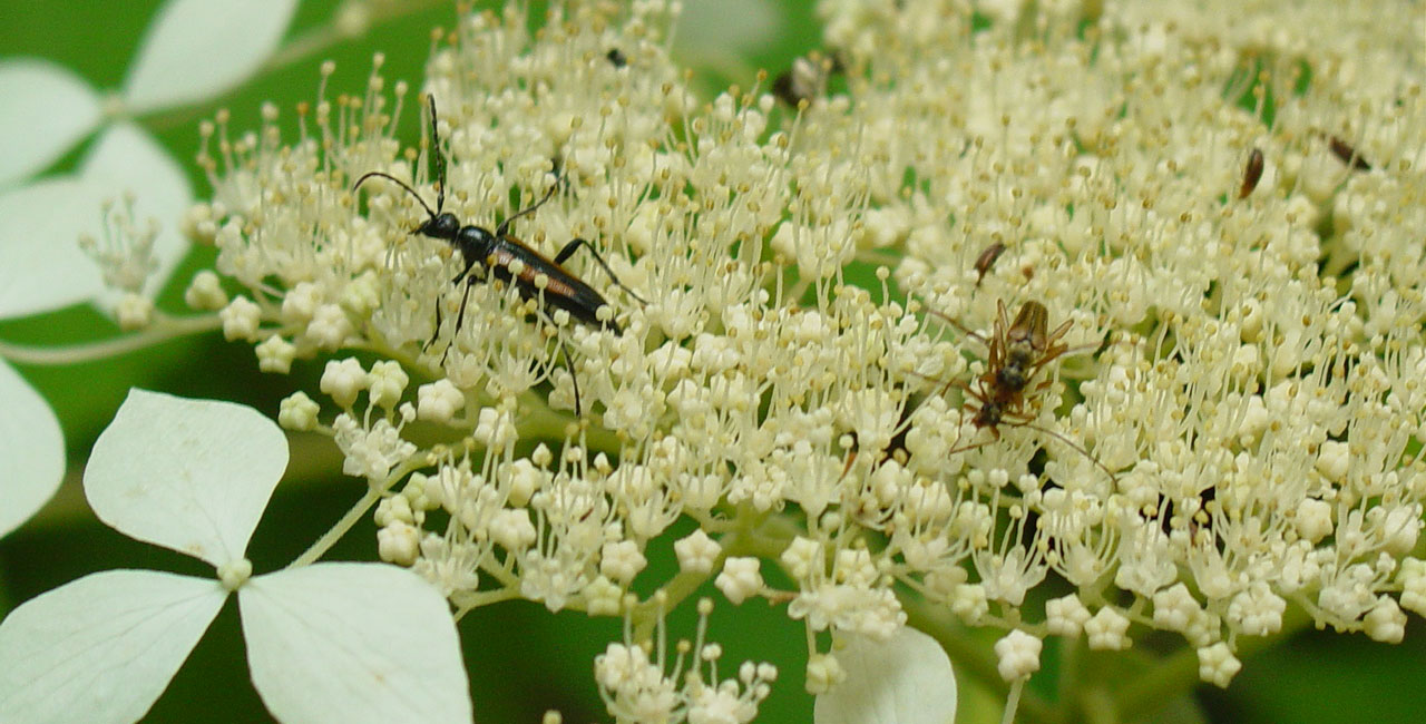 Insects on Flower at Holmes Educational State Forest