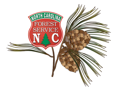 Longleaf Pine illustration with NCFS Shield