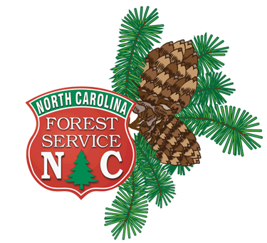Shortleaf Pine illustration with NCFS Shield