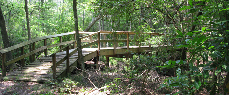 Bridge and Trail at Turnbull Creek Educational State Forest
